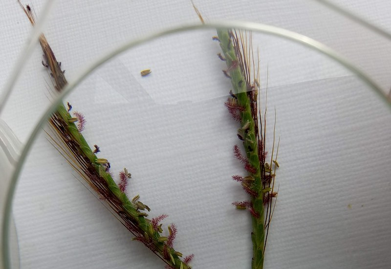Grass Gazers: Citizen Science Project